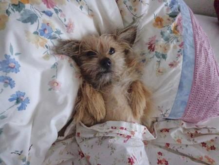 tucked-up