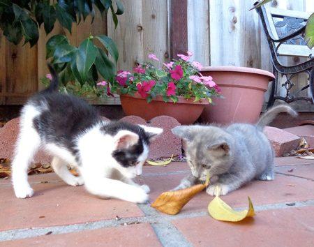 Maggie and Misty on leaf patrol!