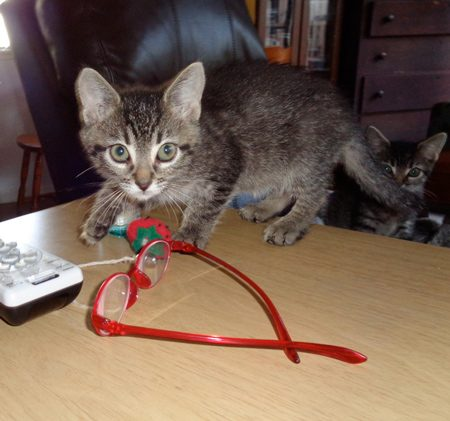 Cat Toy.. glasses... DirecTV remote... same thing.